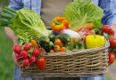 Balogh Gábor: Életünk ételünk fényében